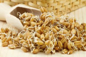 использование зародышей пшеницы
